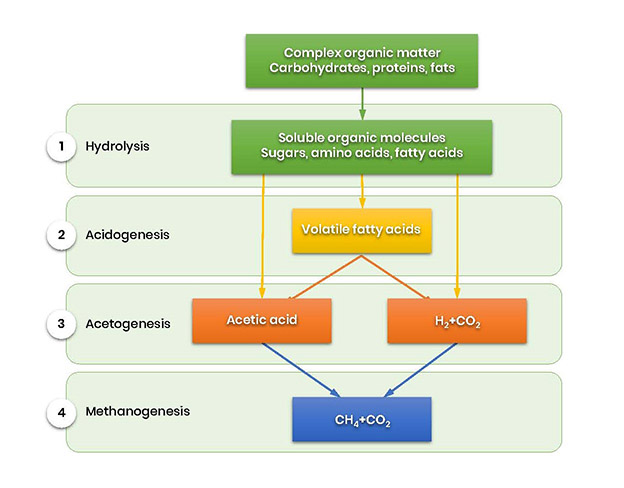 Stages of anaerobic digestion process. Methane production. Process chart of biogas production stages.